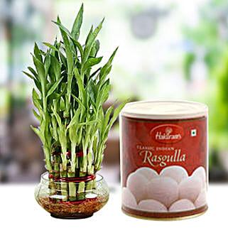Lucky Tikka with Sweet: Indoor Plants in UAE