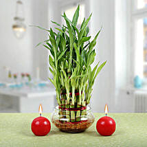 Three Layer Lucky Bamboo Plant N Candles: Christmas Gifts to UAE