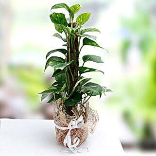 Utmost Perfection: Indoor Plants in UAE