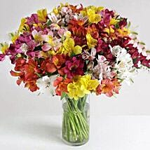 32 British Alstroemeria: Send Gifts to Manchester, UK