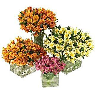 50 Peruvian Lilies: Friendship Day