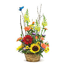 Butterfly Garden USA: Send Birthday Gifts to Indianapolis
