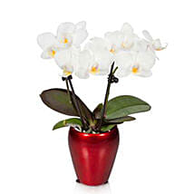 Campfire Mini Orchid: Corporate Hampers to USA
