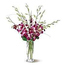 Dendrobium Orchids: Send Just Because Flowers to USA