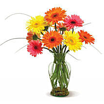 Happy Gerberas: Just Because Flowers in USA